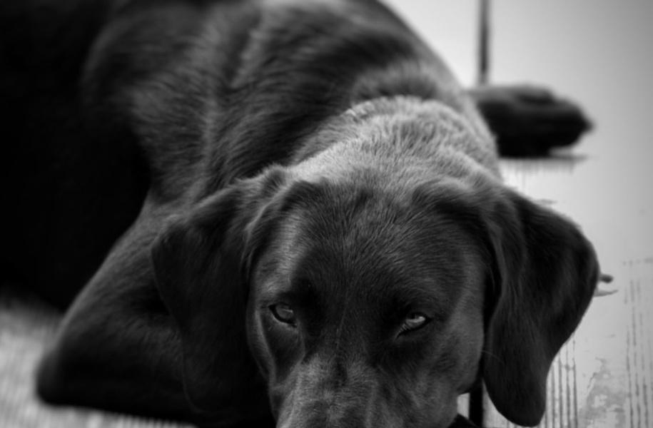 shooting-photo-chien