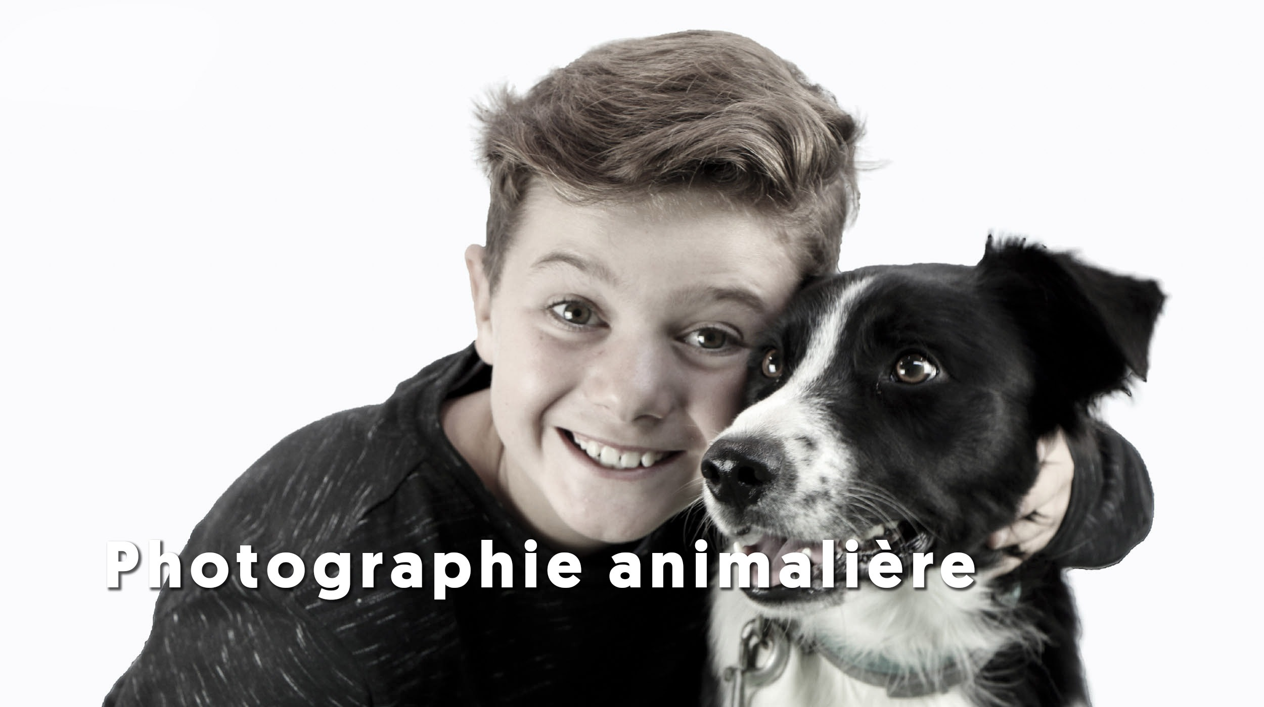 photo-animaliere-chien-animal-de-compagnie